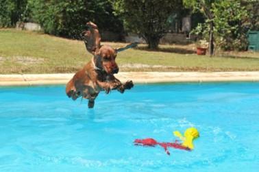 cao-na-piscina-620x412