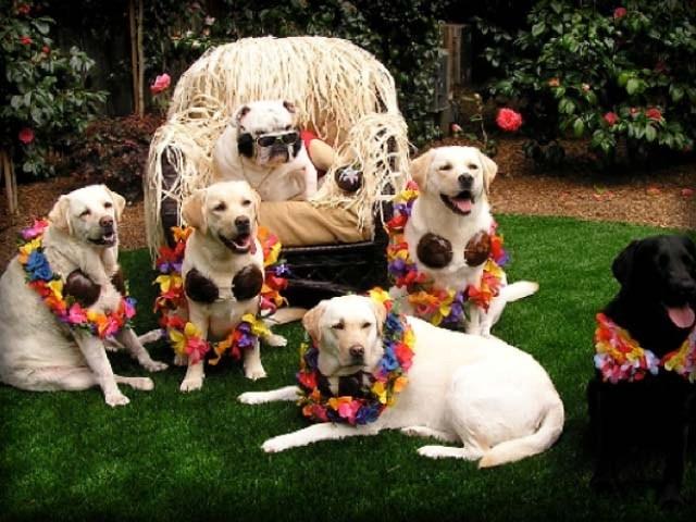 festa-ula-ula-cachorros